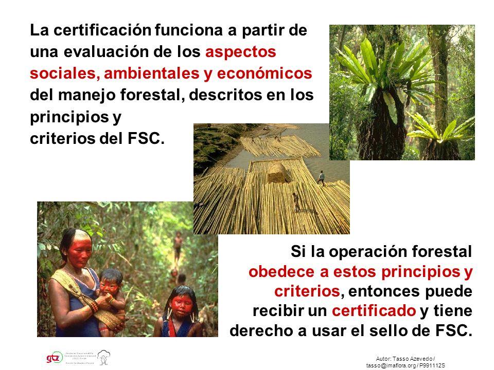 Autor: Tasso Azevedo / tasso@imaflora.org / P991112S La certificación funciona a partir de una evaluación de los aspectos sociales, ambientales y económicos del manejo forestal, descritos en los principios y criterios del FSC.