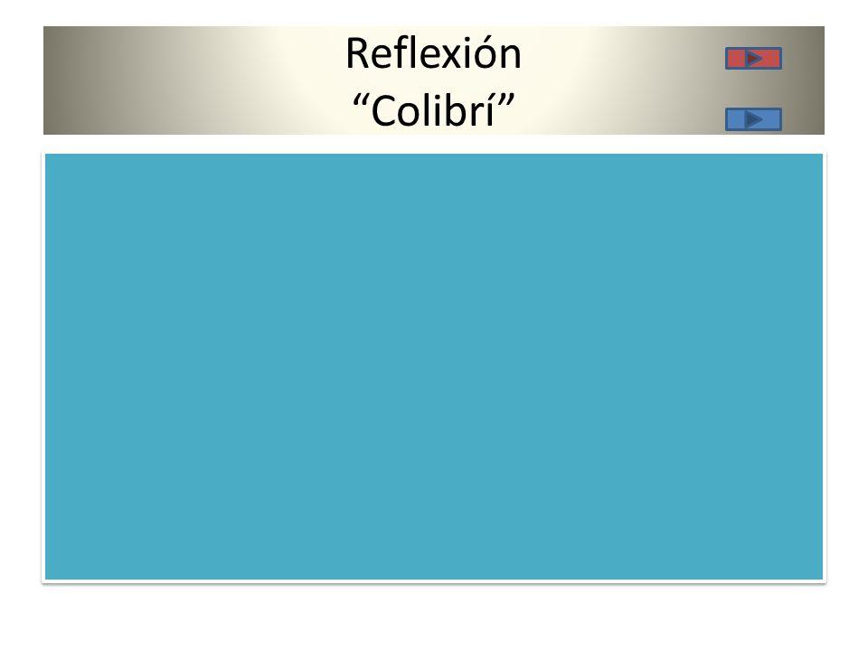 Reflexión Colibrí