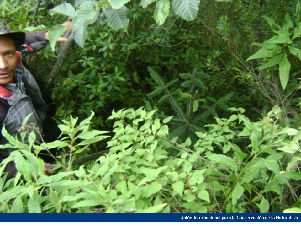 Otras actividades Reuniones para la elaboración del Mapa y Estrategia de Restauración Forestal de Guatemala.