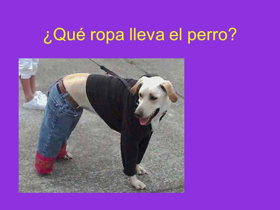 ¿Qué ropa lleva el perro?