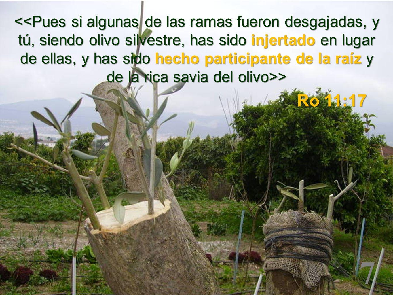 7 > > Ro 11:17