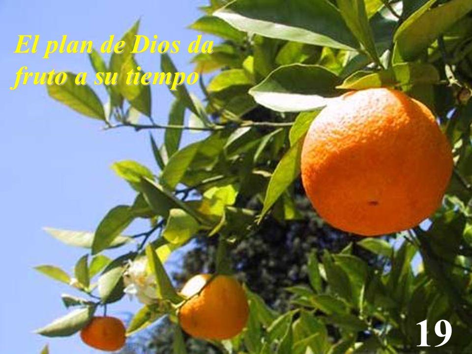 19 El plan de Dios da fruto a su tiempo
