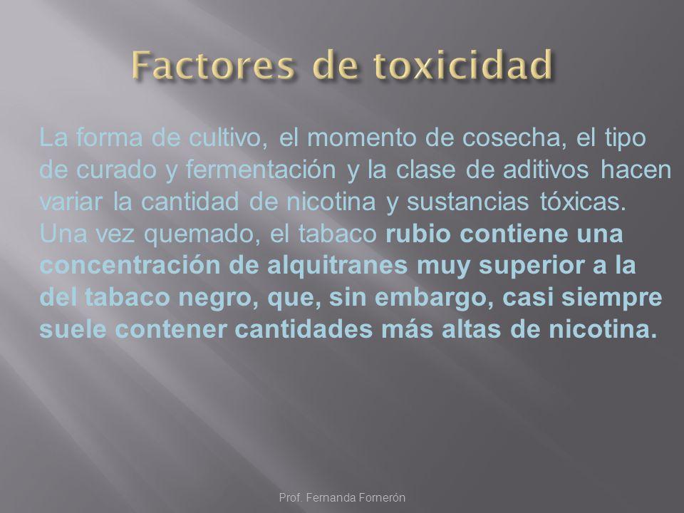 El filtro reduce el número de partículas del humo que pasan al cuerpo durante la calada, y, por tanto, la toxicidad de lo que se inhala.