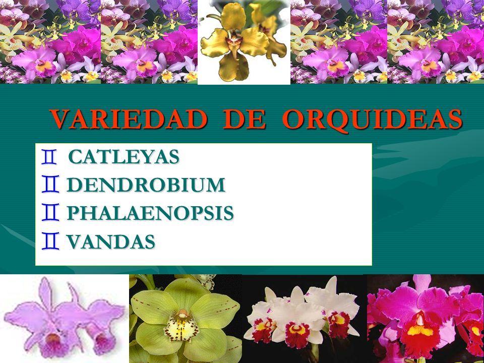 VARIEDAD DE ORQUIDEAS ` CATLEYAS ` DENDROBIUM ` PHALAENOPSIS ` VANDAS