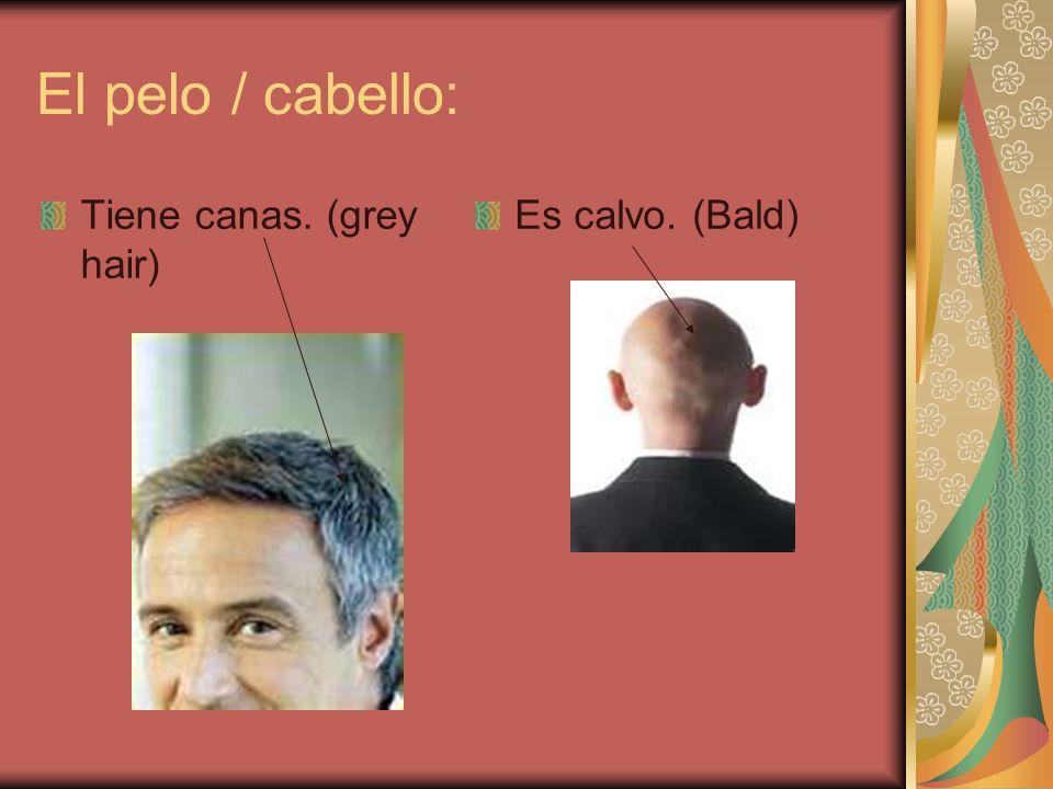 El pelo / cabello: Tiene canas. (grey hair) Es calvo. (Bald)