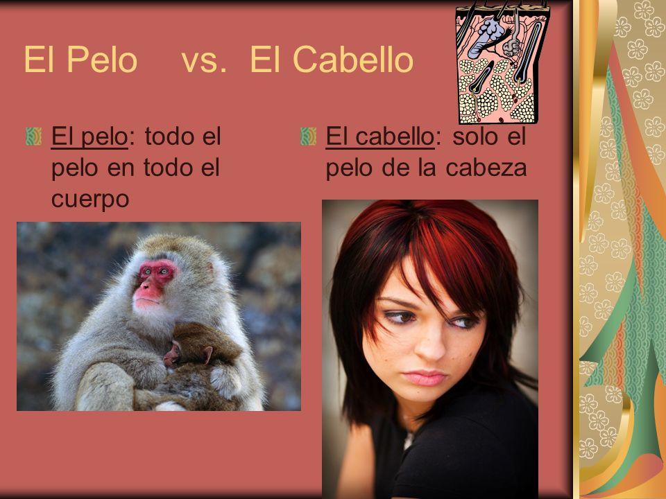 El Pelo vs. El Cabello El pelo: todo el pelo en todo el cuerpo El cabello: solo el pelo de la cabeza