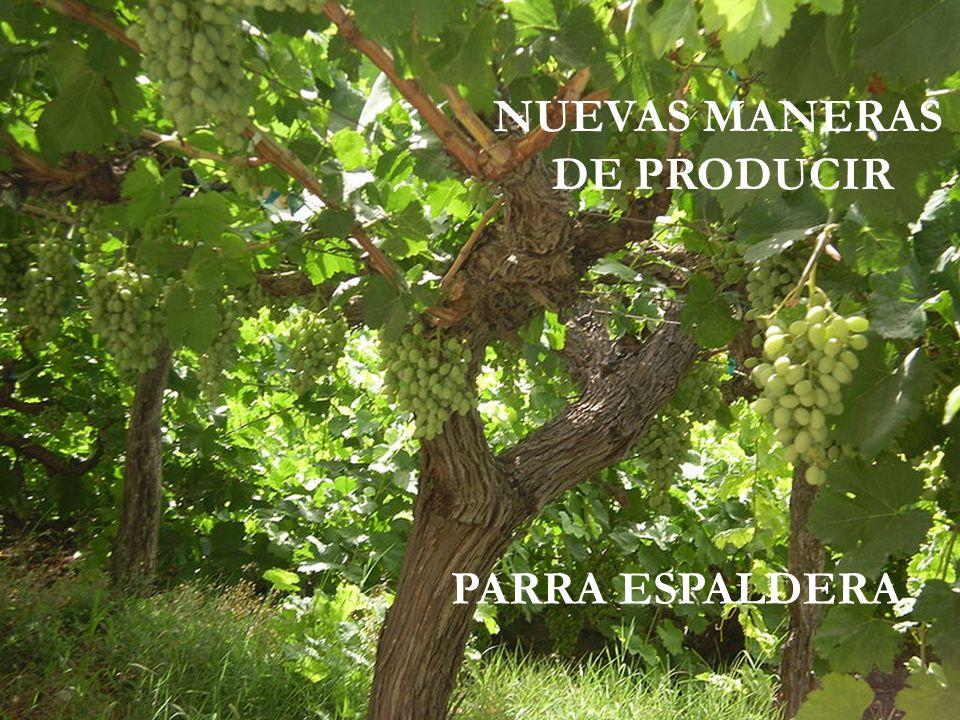 NUEVAS MANERAS DE PRODUCIR PARRA ESPALDERA