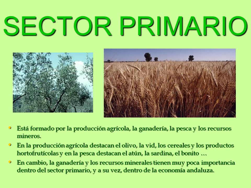 SECTOR SECUNDARIO Andalucía está muy poco industrializada.