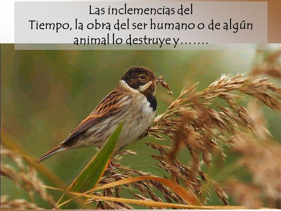 Las inclemencias del Tiempo, la obra del ser humano o de algún animal lo destruye y…….