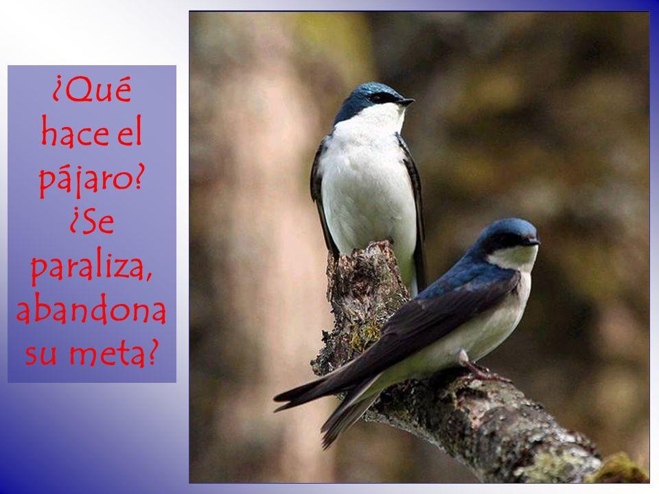 ¿Qué hace el pájaro? ¿Se paraliza, abandona su meta?