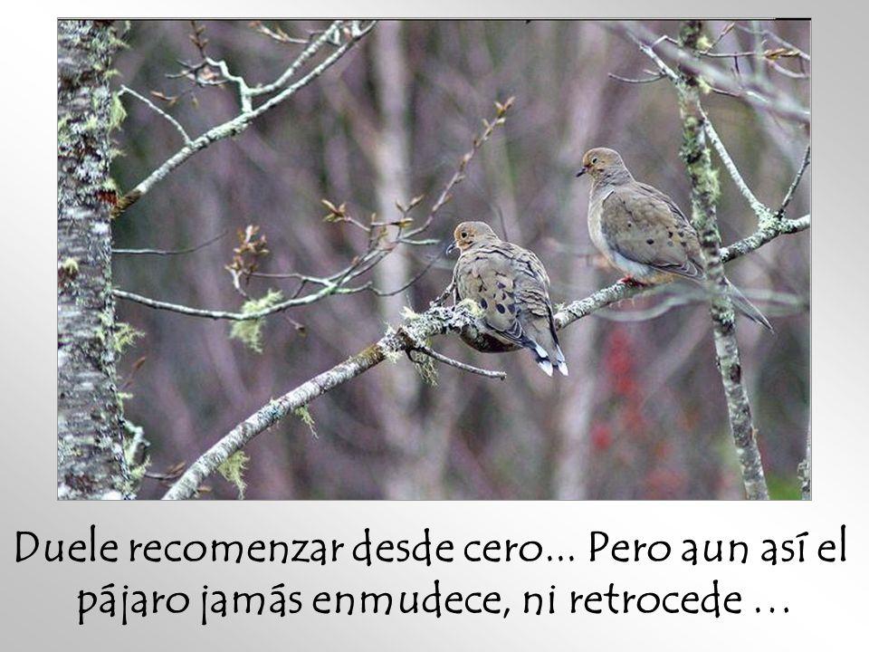 Duele recomenzar desde cero... Pero aun así el pájaro jamás enmudece, ni retrocede …