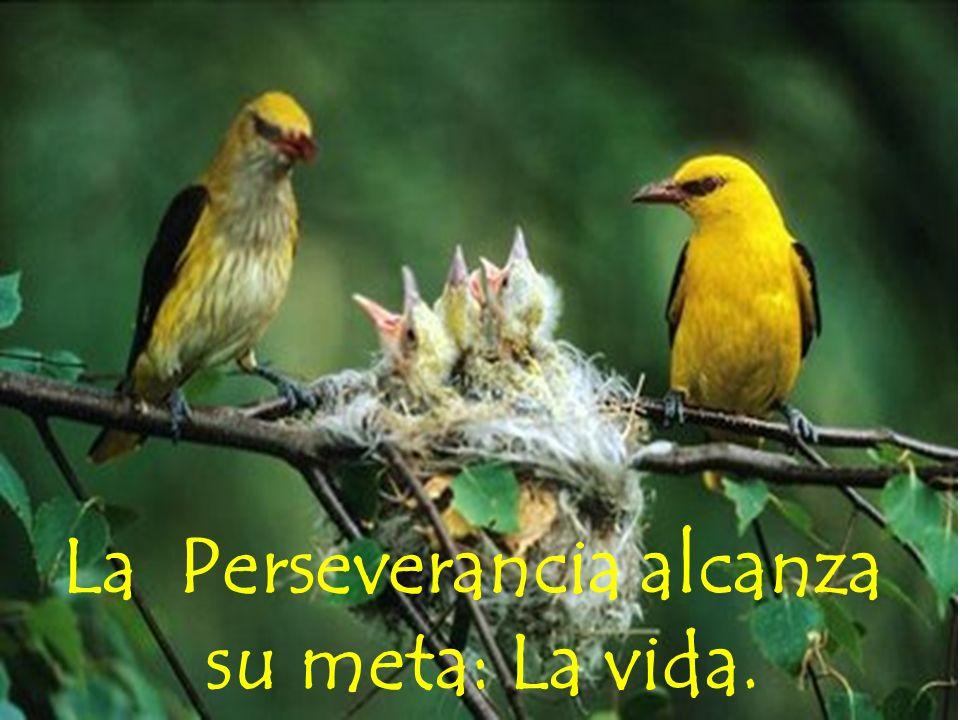 La Perseverancia alcanza su meta: La vida.