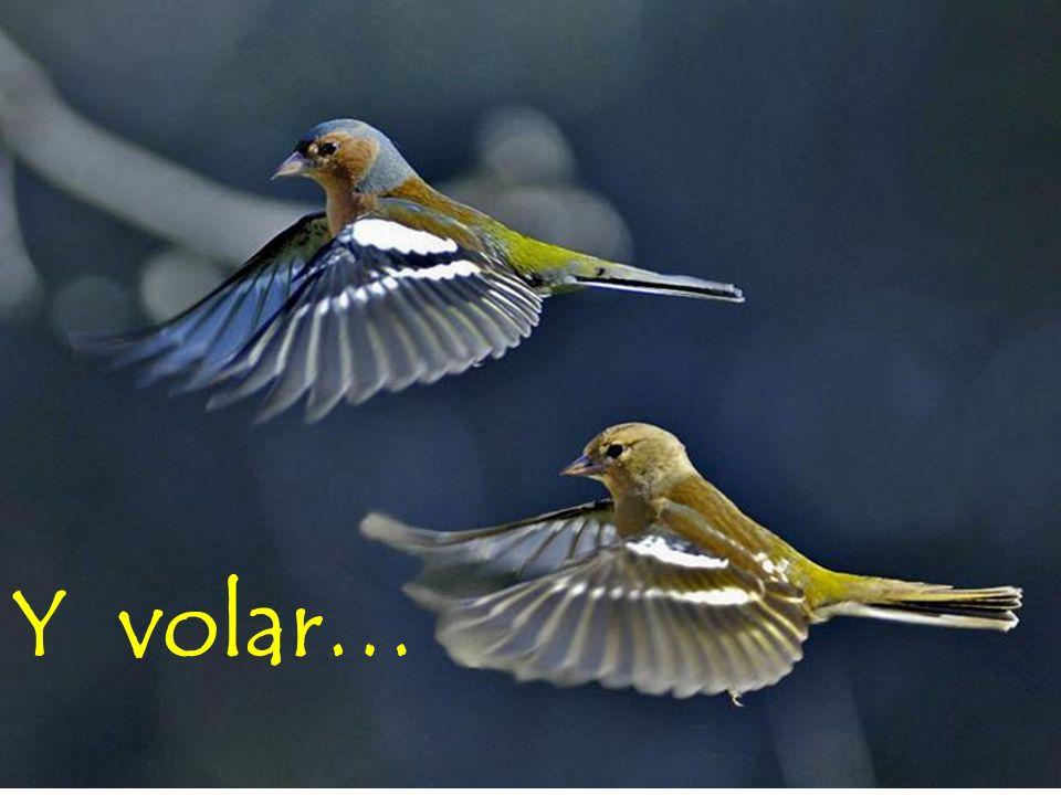 Y volar…