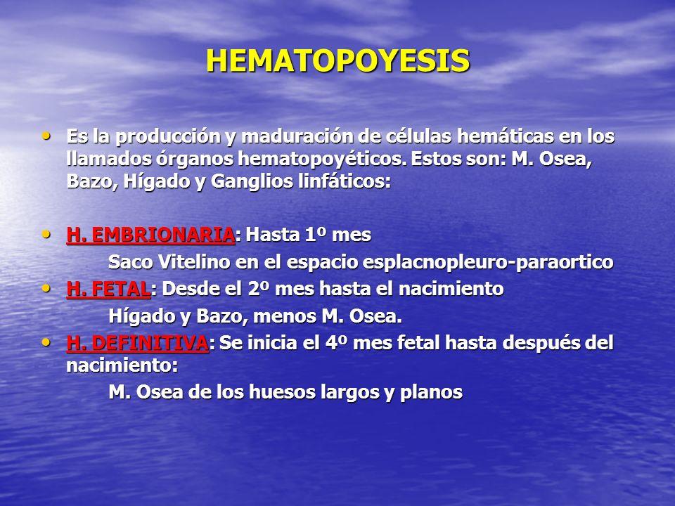 HEMATOPOYESIS Es la producción y maduración de células hemáticas en los llamados órganos hematopoyéticos. Estos son: M. Osea, Bazo, Hígado y Ganglios
