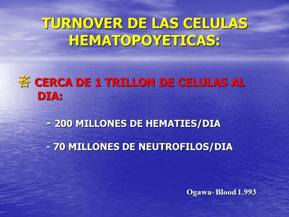 TURNOVER DE LAS CELULAS HEMATOPOYETICAS: CERCA DE 1 TRILLON DE CELULAS AL CERCA DE 1 TRILLON DE CELULAS AL DIA: DIA: - 200 MILLONES DE HEMATIES/DIA -