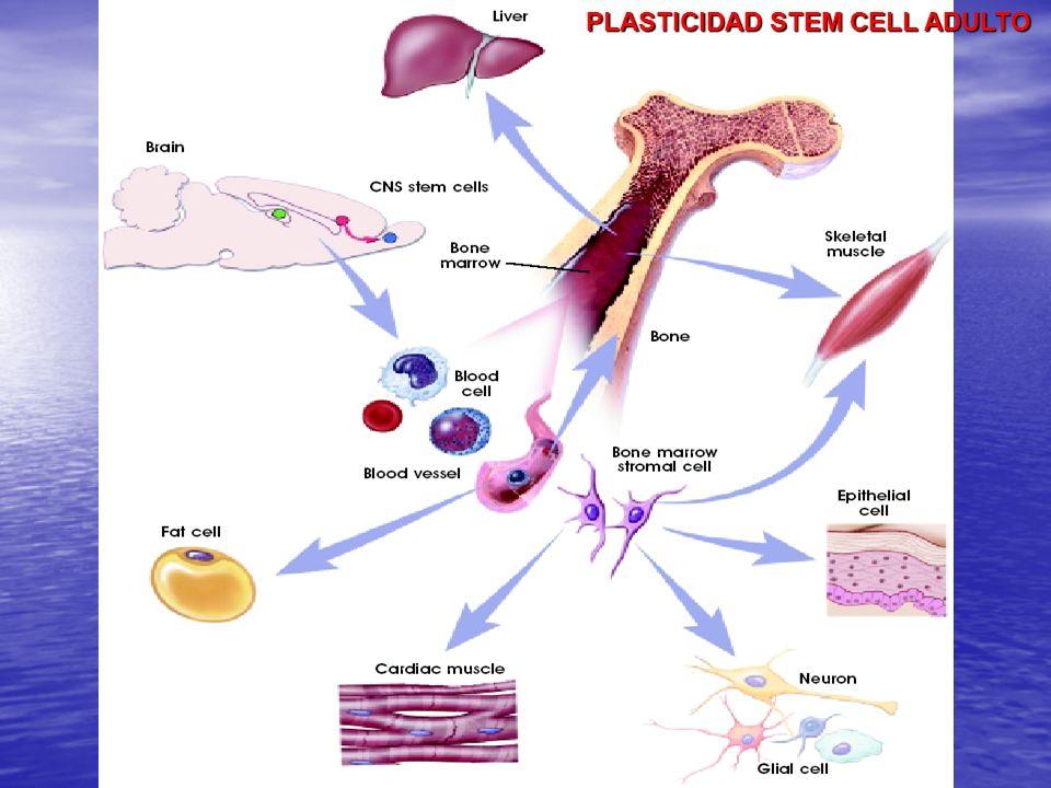 DIFERENCIACION DE STEM CELL HEMATOPOYETICA Y DEL ESTROMA