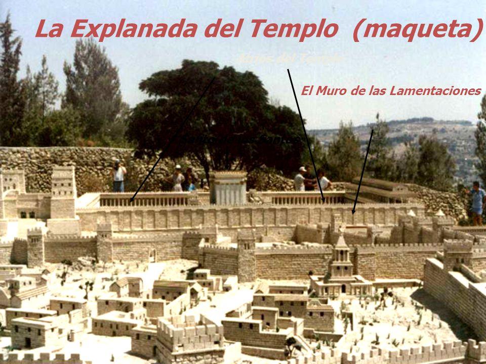 Herodes (27 a.C.), sobre la base del Templo salomónico, reconstruyó un bellísimo Templo PÓRTICOS Pórtico de Salomón Entrada Sur Entrada oriental ATRIO