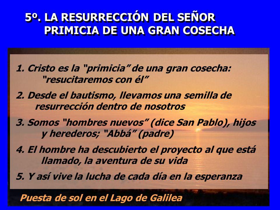 5º. LA RESURRECCIÓN DEL SEÑOR PRIMICIA DE UNA GRAN COSECHA 5º. LA RESURRECCIÓN DEL SEÑOR PRIMICIA DE UNA GRAN COSECHA 1. Cristo es la primicia de una