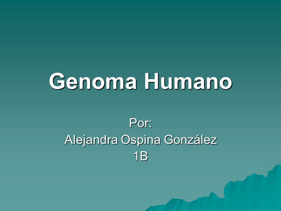 Genoma Humano Por: Alejandra Ospina González 1B