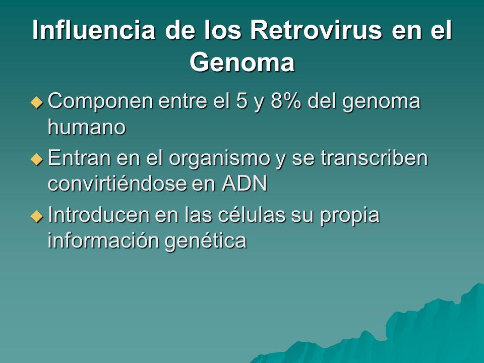 Influencia de los Retrovirus en el Genoma Componen entre el 5 y 8% del genoma humano Componen entre el 5 y 8% del genoma humano Entran en el organismo