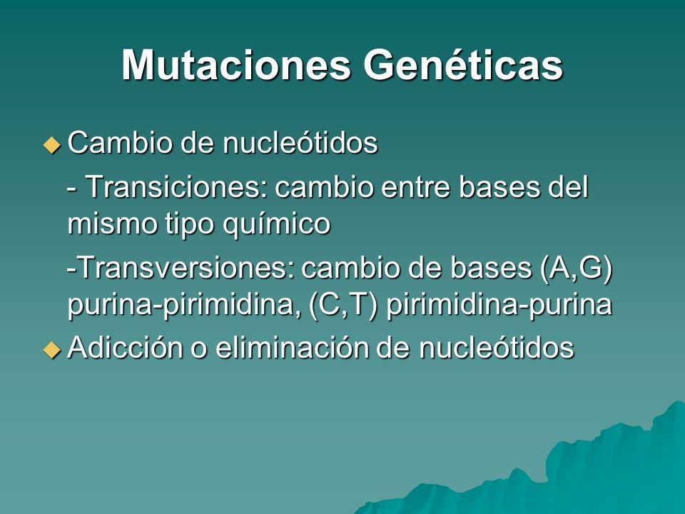 Mutaciones Genéticas Cambio de nucleótidos Cambio de nucleótidos - Transiciones: cambio entre bases del mismo tipo químico - Transiciones: cambio entr