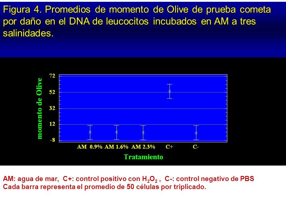 Figura 4. Promedios de momento de Olive de prueba cometa por daño en el DNA de leucocitos incubados en AM a tres salinidades. AM: agua de mar, C+: con