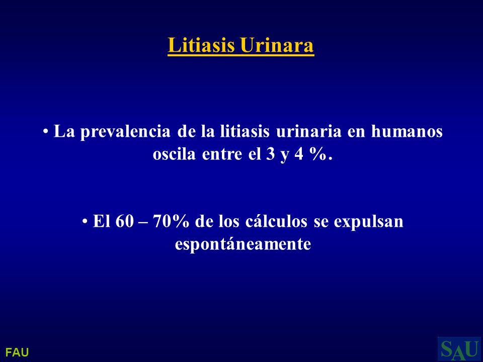 Litiasis Urinara La prevalencia de la litiasis urinaria en humanos oscila entre el 3 y 4 %. El 60 – 70% de los cálculos se expulsan espontáneamente FA
