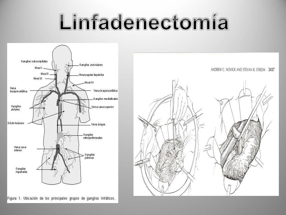 16/02/2014IOAHR7 Vena renal Arteria renal Uréter Arteria y Vena Espermática/ Ovárica