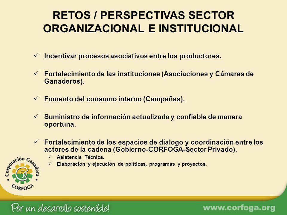 RETOS / PERSPECTIVAS SECTOR ORGANIZACIONAL E INSTITUCIONAL Incentivar procesos asociativos entre los productores. Fortalecimiento de las instituciones