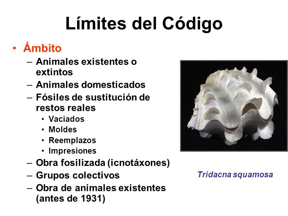 Límites del Código Ámbito –Animales existentes o extintos –Animales domesticados –Fósiles de sustitución de restos reales Vaciados Moldes Reemplazos I