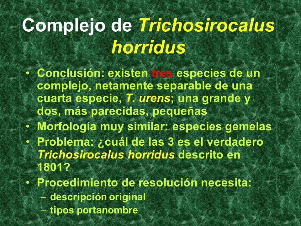 Trichosirocalus horridus Se encuentran caracteres morfológicos constantes, aunque menudos (microcaracteres), de separación