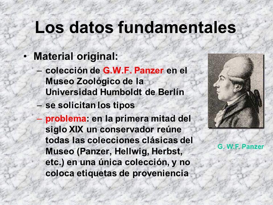 Los datos fundamentales Descripción original: –Curculio horridus Panzer, 1801, descrito en: Fauna Insectorum Germanica, 84: nº 9, consta de texto en l