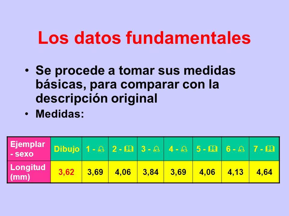 Los datos fundamentales Material original: –se reciben 7 ejemplares de la colección clásica, sin etiquetas de colección de origen –todos pinchados –se