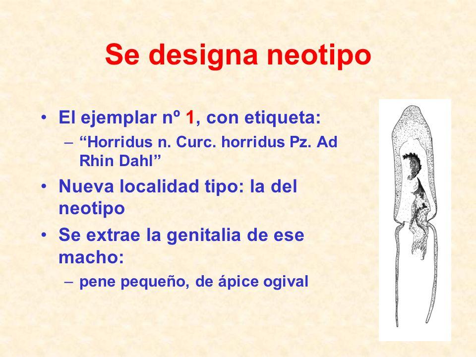 ¿Algún motivo para preferir uno de los dos ejemplares? Designación de neotipo 14 Horridus n. Curc. horridus Pz. Ad Rhin Dahl El nº 1 tiene una etiquet