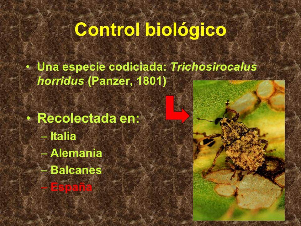 Control biológico Búsqueda de especies para control –estudio de los gremios o guilds –recolección de ejemplares vivos –pruebas en laboratorio en orige