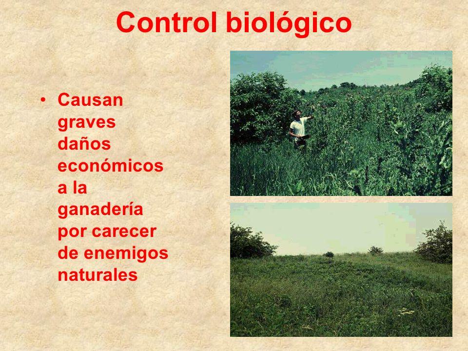 Control biológico Para control de: Carduus Cirsium Onopordum