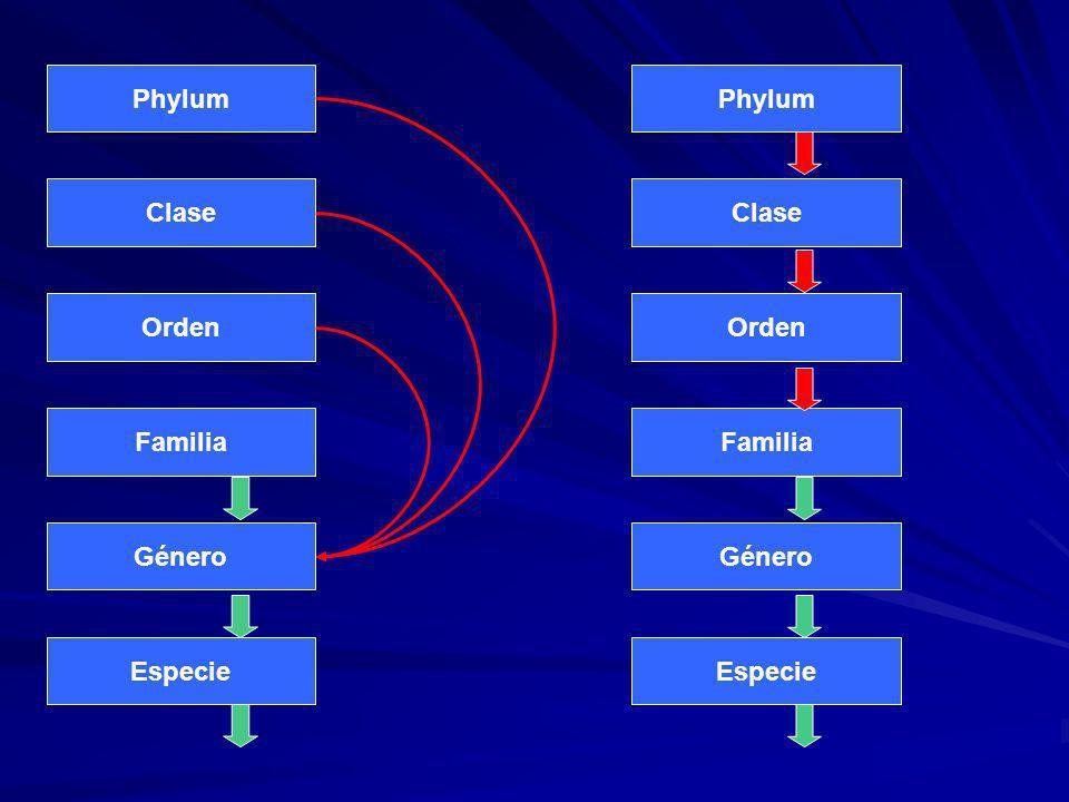 Phylum Clase Orden Familia Género Especie Phylum Clase Orden Familia Género Especie