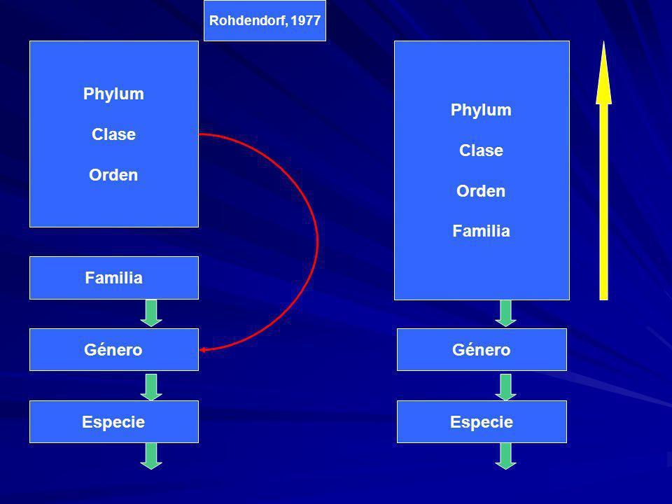 Phylum Clase Orden Familia Género Especie Phylum Clase Orden Familia Género Especie Rohdendorf, 1977 Phylum Clase Orden Familia