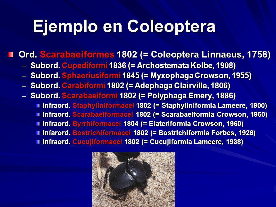 Ejemplo en Coleoptera Ord. Scarabaeiformes 1802 (= Coleoptera Linnaeus, 1758) –Subord. Cupediformi 1836 (= Archostemata Kolbe, 1908) –Subord. Sphaeriu
