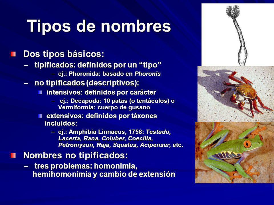 Tipos de nombres Dos tipos básicos: Dos tipos básicos: – tipificados: definidos por un tipo –ej.: Phoronida: basado en Phoronis – no tipificados (desc