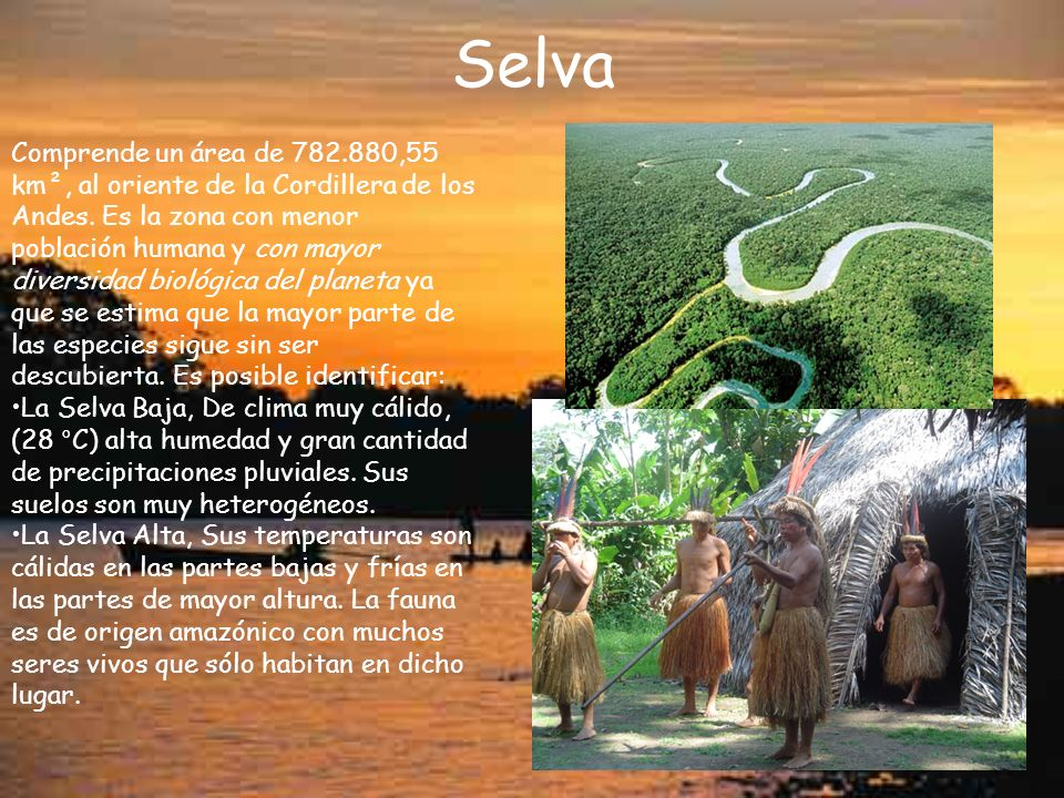 Selva Comprende un área de 782.880,55 km², al oriente de la Cordillera de los Andes. Es la zona con menor población humana y con mayor diversidad biol