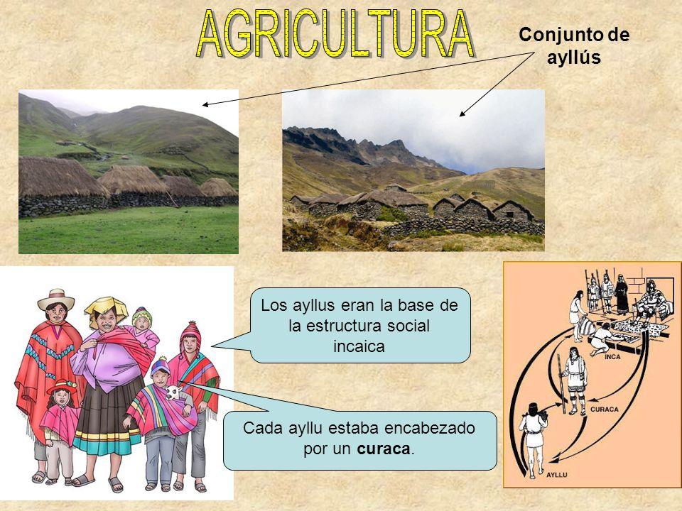 Los ayllus eran la base de la estructura social incaica Cada ayllu estaba encabezado por un curaca. Conjunto de ayllús