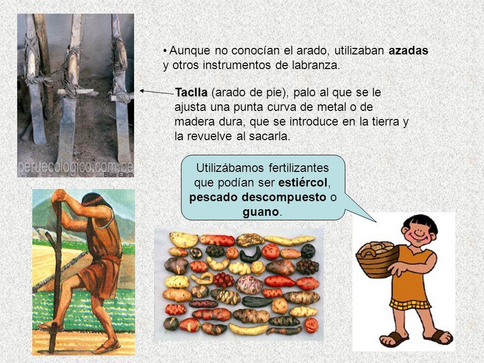 Utilizábamos fertilizantes que podían ser estiércol, pescado descompuesto o guano. Aunque no conocían el arado, utilizaban azadas y otros instrumentos