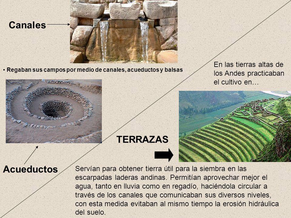 Canales Acueductos En las tierras altas de los Andes practicaban el cultivo en… TERRAZAS Servían para obtener tierra útil para la siembra en las escar