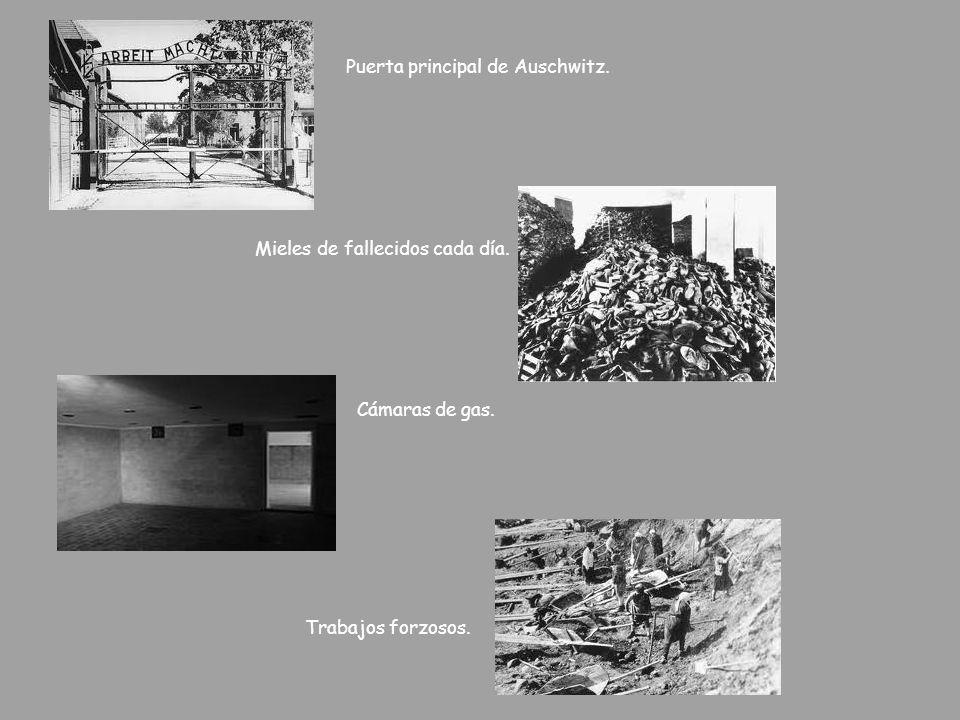 Puerta principal de Auschwitz. Mieles de fallecidos cada día. Cámaras de gas. Trabajos forzosos.