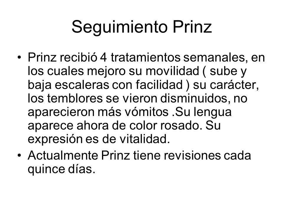 Seguimiento Prinz Prinz recibió 4 tratamientos semanales, en los cuales mejoro su movilidad ( sube y baja escaleras con facilidad ) su carácter, los t