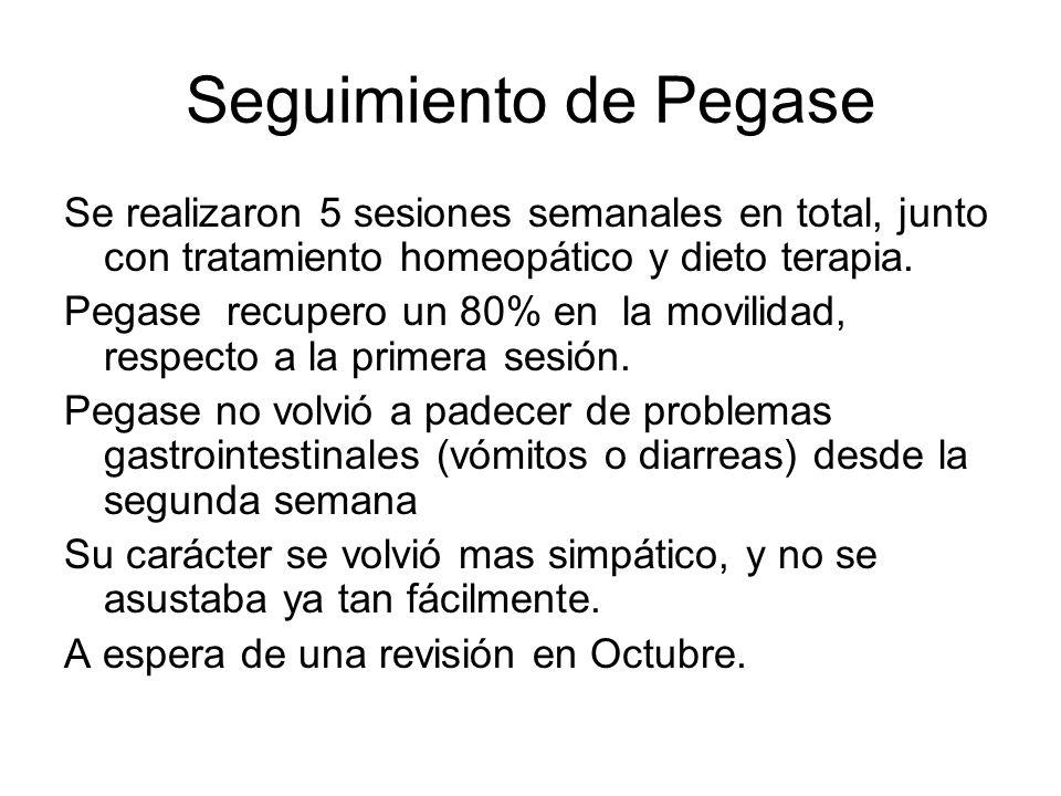 Seguimiento de Pegase Se realizaron 5 sesiones semanales en total, junto con tratamiento homeopático y dieto terapia. Pegase recupero un 80% en la mov