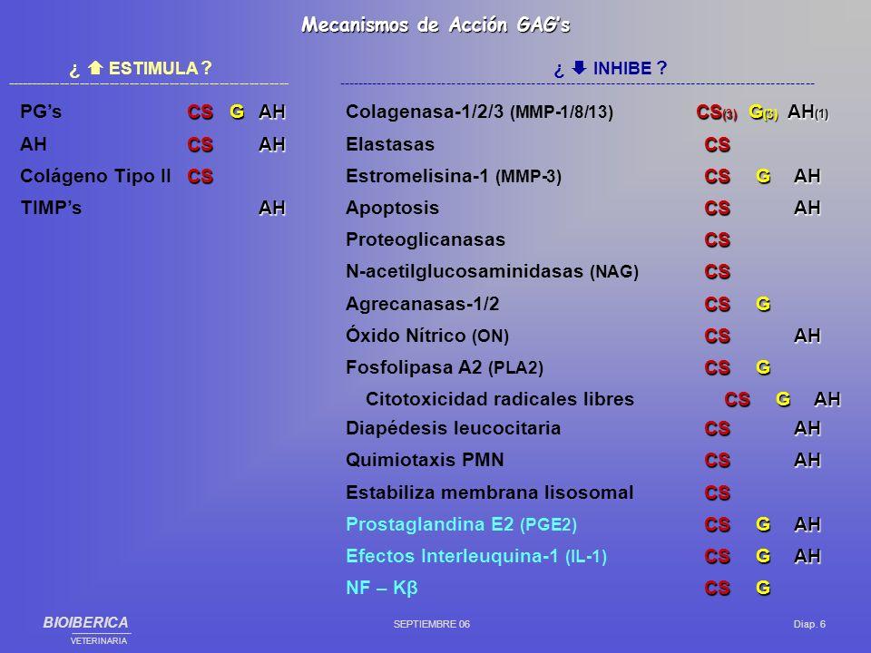 Edad Hiperutilización de la articulación Inestabilidad / desequilibrios articulares Sobrepeso Cambios / desequilibrios metabólicos Inmovilizaciones Otros (traumatismos importantes, densidad mineral ósea, genética, enfermedades endocrinas, etc.) CausasARTROSIS: BIOIBERICA SEPTIEMBRE 06 Diap.