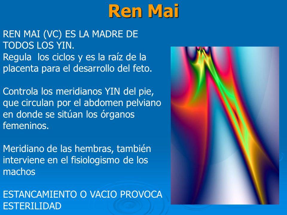 Ren Mai REN MAI (VC) ES LA MADRE DE TODOS LOS YIN. Regula los ciclos y es la raíz de la placenta para el desarrollo del feto. Controla los meridianos