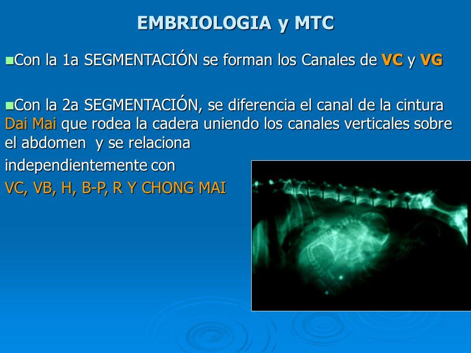 EMBRIOLOGIA y MTC Con la 1a SEGMENTACIÓN se forman los Canales de VC y VG Con la 1a SEGMENTACIÓN se forman los Canales de VC y VG Con la 2a SEGMENTACI